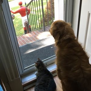 Other - Boys waiting for the mail - and me for my purchase